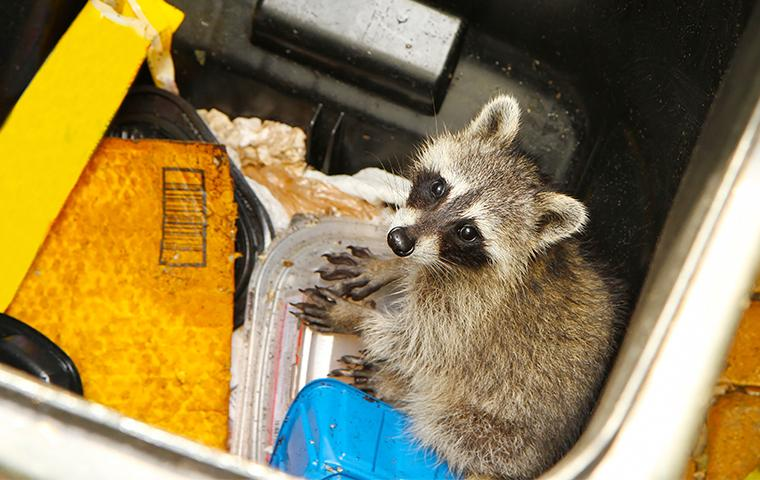 Kansas City Wildlife Removal